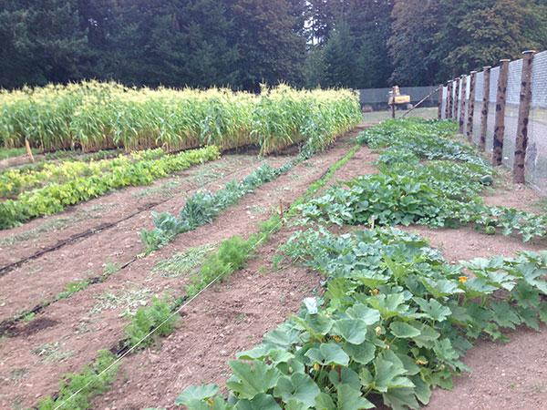 3-garden